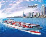 Best International Ocean Transportation From China
