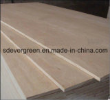 White Wood Plywood with Evergreen Wood