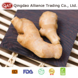Exporting Fresh Ginger with Competitive Price