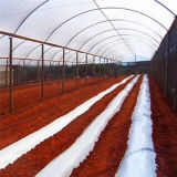 Single Layer Cover Film for Farm Greenhouse, Polyethylene Greenhosue with Film Cover or Sun Shade Plastic Film