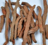 Tanshinone Danshen Root Extract for Foods and Supplement