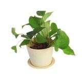 Hot Sale Eco-Friendly Colorful Plastic Pot