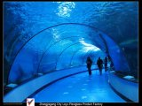 Custom Aquarium Acrylic Tunnel Plates