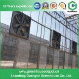 Large Economical Glass Greenhouse/ Agricultural Greenhouse with Ventilation System