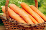 New Crop Fresh China Carrot