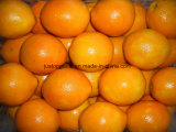Fresh Chinese Mandarin/Navel Orange (48/56/64/72/80/88/100)