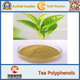 GMP Factory Supplier 100% Natural Java Tea Extract 40% Polyphenols
