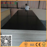 Film Faced Plywood with Good Quality and Cheap Price