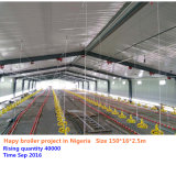 2017 Hot Sale Chicken Farm Equipments with Steel Structure Poultry Shed