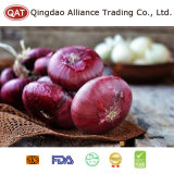 Chinese High Quality Fresh Red Onion