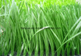 Synthetic Grass, Wear-Resistance 20mm-50mm Artificial Turf