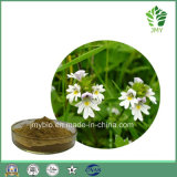 High Quality Natural Flavone Eyebright Extract, 4: 1~20: 1