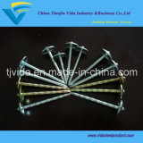 Galvanized Umbrella Roofing Nails with Lowest Prices and Excellent Quality