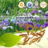Pure Herb Medicine Irkutsk Anemone Rhizome