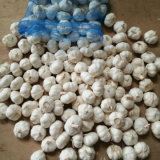 New Crop Fresh Snow White Garlic From China