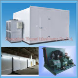 Professional Cold Room with High Efficence