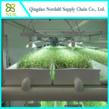 Commercial Hydroponic Growing System