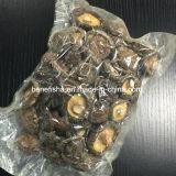 Dried Winter Mushroom