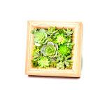 Wood Framed Wall Mounted Artificial Succulent Plant Arrangement Art Display