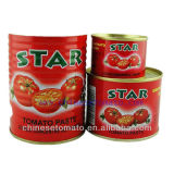 Fresh Tomato Paste with High Quality