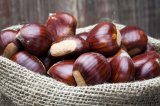 Wholesale Price of Fresh Chestnut