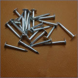 Factory Price White Color Galvanized Clout Nail