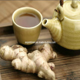 Supplier Dry Ginger Fresh Ginger