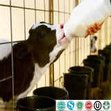 Goat Milk Powder Replacer for Goat Feed