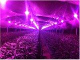 Sigma 18W 36W Indoor UV Fruit Vegetable Plant Grow Growing LED Device Lighting