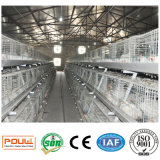 a Type Best Price Poultry Farm Broiler Chicken Cage Equipment