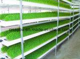 Barley Alfalfa Wheat Animal Fodder Feed Grass Sprouting Growing Machine