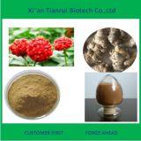 Radix Notoginseng / Sanchi Extract, Radix Notoginseng Powder