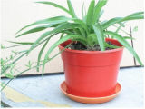 High Quality Bamboo Fiber Flower Pots (BC-FP1043)