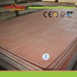 Poplar Plywood From China Munufacturer