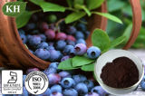 Natural Bilberry Extract with Anthocyanidins 15%- 35% by UV