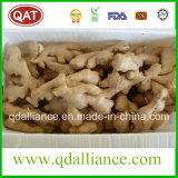 Organic Dried Ginger with Gap Certificate