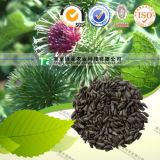 Manufacturer Supply Natural Herbal Medicine Burdock