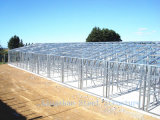 SGS Approved Excellent Steel Structure in Cost Effective (L-S-004)