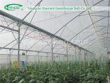 High roof commercial film greenhouse for Tropical Area