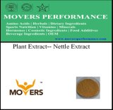 High Quality Plant Extract Nettle Extract