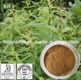 Lemon Verbena Extract Spec: 10: 1; 40: 1