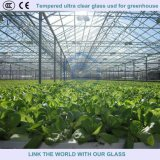 3.2mm-6mm Tempered Ultra Clear Patterned Glass Used for Greenhouse