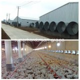 Steel Structure Livestock Farm Construction for Poultry