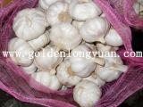 Fresh New Crop Red Garlic
