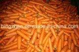Regular Supplier 2017 New Crop Chinese Fresh Carrot