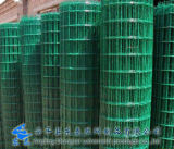 High Quality Plastic Coated Holland Wire Mesh