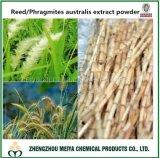 China Origin Phragmites Australis /Reed Root Powder Extract 10: 1, 20: 1 for Health