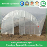 Economical Single Span Arch Pipes Film Greenhouse
