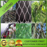 Anti Bird Protection Net for Sale From Manufacturer