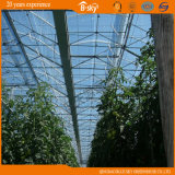 High Light Transmittance F-Clean Film Greenhouse